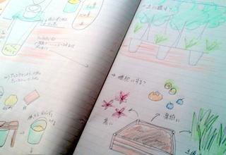 bio-idea01.jpg